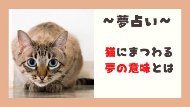 夢占い 猫